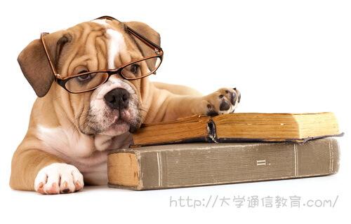 ペット関連のテクノロジーを紹介